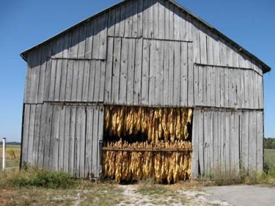 Kentucky Tobacco JPG
