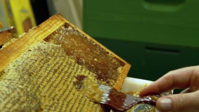 cera-d'api-produzione-di-miele