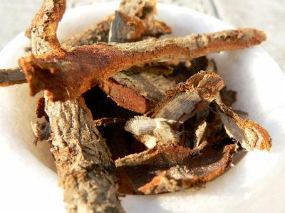 benefits of sassafras tea 934177934177