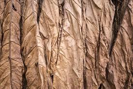 kentucky foglie