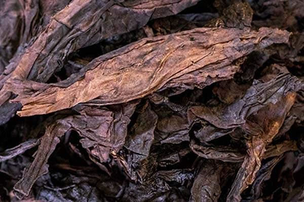 Latakia foglie essiccate